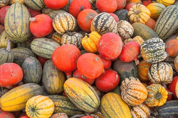 A selection of autumn squash fruits